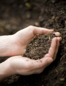 Compost Smells and Accelerator