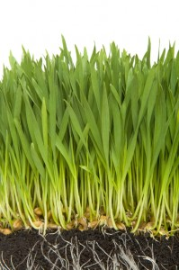Grass Fertilizer