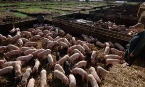 Farm Odor Eliminator
