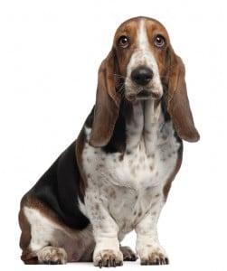 Pet Smells - dog deodorizer